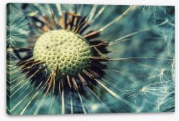 Dandelion gone Stretched Canvas 84427787