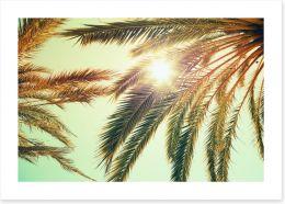 Sunlight through the palm fronds Art Print 84515950