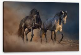 Horses in the desert dust Stretched Canvas 85582216