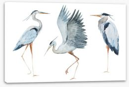 Birds Stretched Canvas 87462261