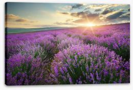 Lavender fields forever Stretched Canvas 88269062