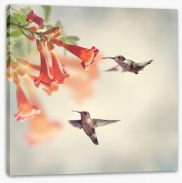 Ruby throated hummingbirds Stretched Canvas 90148295