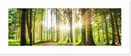 Sunbeam forest panorama Art Print 92474685