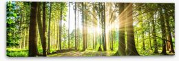 Sunbeam forest panorama Stretched Canvas 92474685