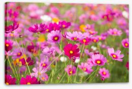 Pink cosmos forever Stretched Canvas 96938225