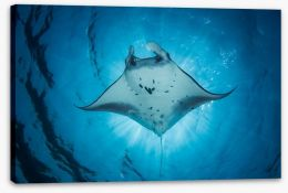 Under the Manta Ray Stretched Canvas 97401055