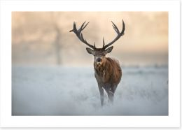 Red deer in winter Art Print 97451015