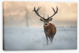 Red deer in winter Stretched Canvas 97451015