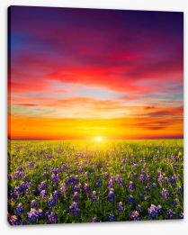 Sunsets / Rises Stretched Canvas 99521835