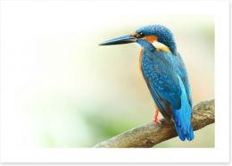 Birds Art Print 99623814