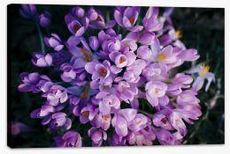 Crocus blossom II