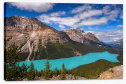 Peyto view Stretched Canvas SL0014