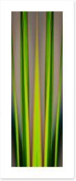 Dracaena leaves Art Print TH0003