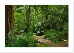Forests Art Print 100146257