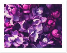 For the love of Lilac Art Print 108289994