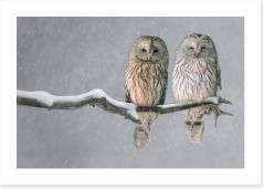 Together in the snow Art Print 114512559