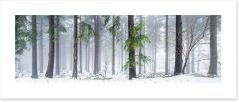 Forests Art Print 126693872