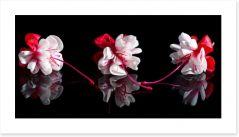 Flowers Art Print 126992475