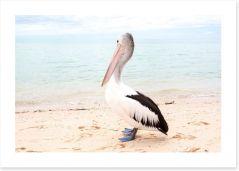 Monkey Mia pelican Art Print 128266731