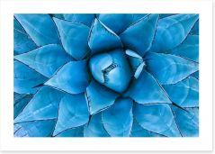 Blue Agave Art Print 128649085