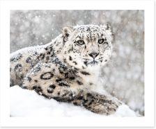 Mammals Art Print 138734201