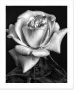 Black and White Art Print 139805106
