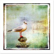 Vintage sea gull Art Print 15133632