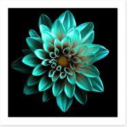 Turquoise dahlia macro Art Print 159437319