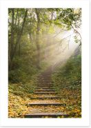 Forests Art Print 177249650