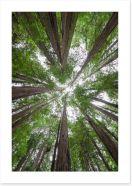 Trees Art Print 181492112