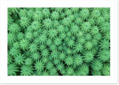 Myriophyllum plants