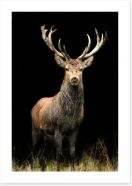Mammals Art Print 19229360