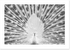Birds Art Print 205939904