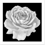 Flowers Art Print 206855525
