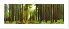 Sunlight forest panorama