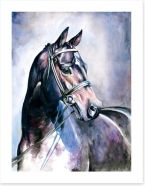 Soulful mare