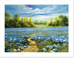 Blossoming cornflowers