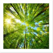 Forests Art Print 250219068