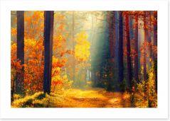Autumn illuminated