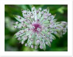 Flowers Art Print 275058910