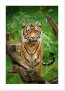 Mammals Art Print 279224803