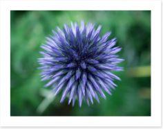 Flowers Art Print 279311113