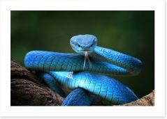 Reptiles / Amphibian Art Print 295055626
