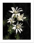 Floral Art Print 33289793