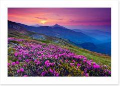 Mountain meadow sunrise