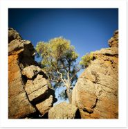 The outback tree