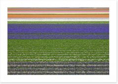 Colourful fields