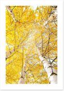 Yellow birch canopy Art Print 44618014