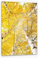 Yellow birch canopy Stretched Canvas 44618014