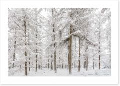 Tranquil snowy forest